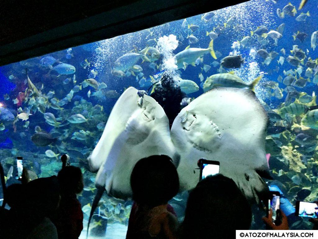 Aquatheatre Aquaria KLCC 11