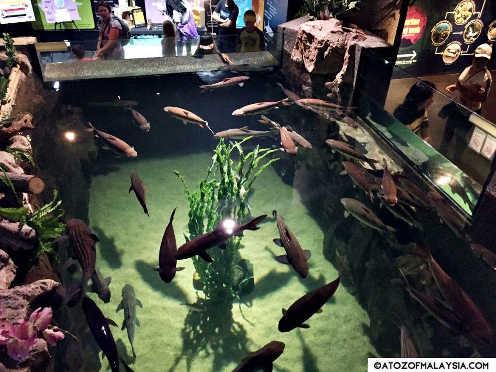 Freshwater Journey Aquaria KLCC fish pond 02