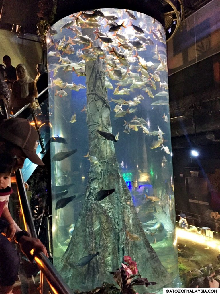 Freshwater Journey Aquaria KLCC fish tank 03