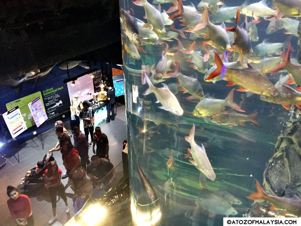 Freshwater Journey Aquaria KLCC fish tank