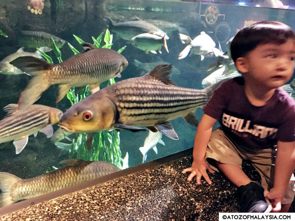 Freshwater Journey Aquaria KLCC little boy 02