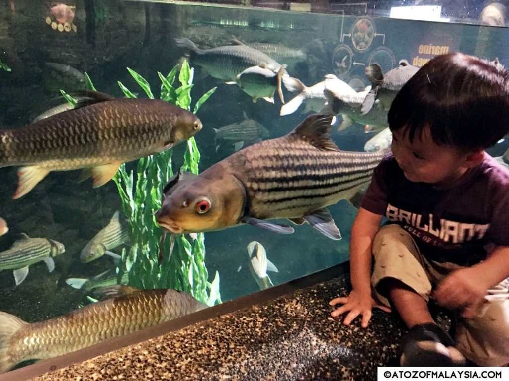 Freshwater Journey Aquaria KLCC little boy