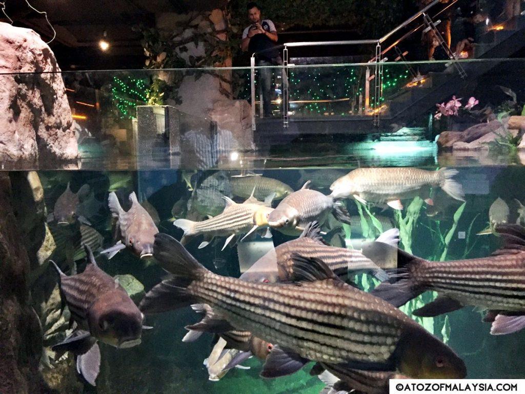 Freshwater Journey Aquaria KLCC terapin fish