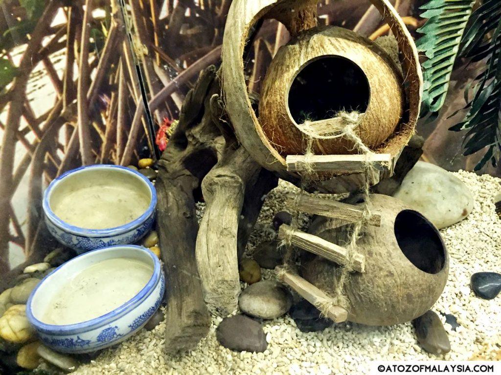 Mud Flats Aquaria KLCC crabs 02