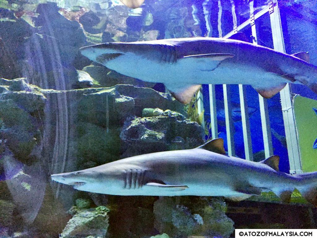 Oceanarium Aquaria KLCC 10