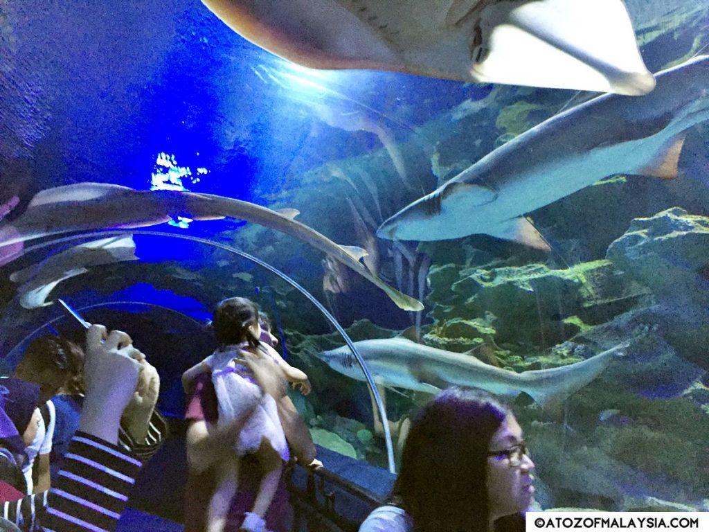 Oceanarium Aquaria KLCC 11