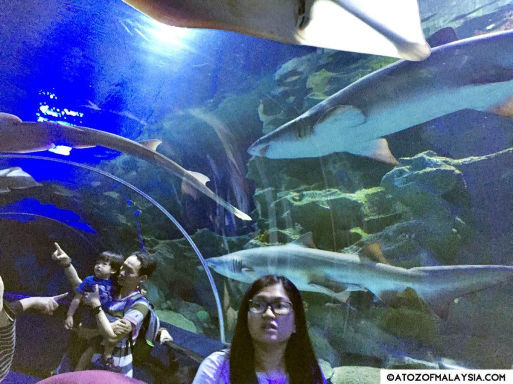Oceanarium Aquaria KLCC 12