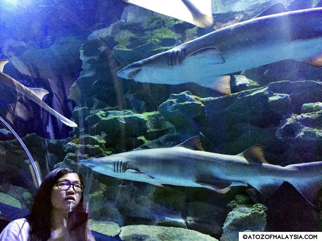 Oceanarium Aquaria KLCC 13