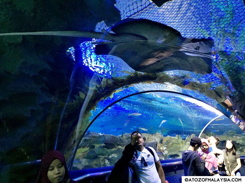 Oceanarium Aquaria KLCC 16