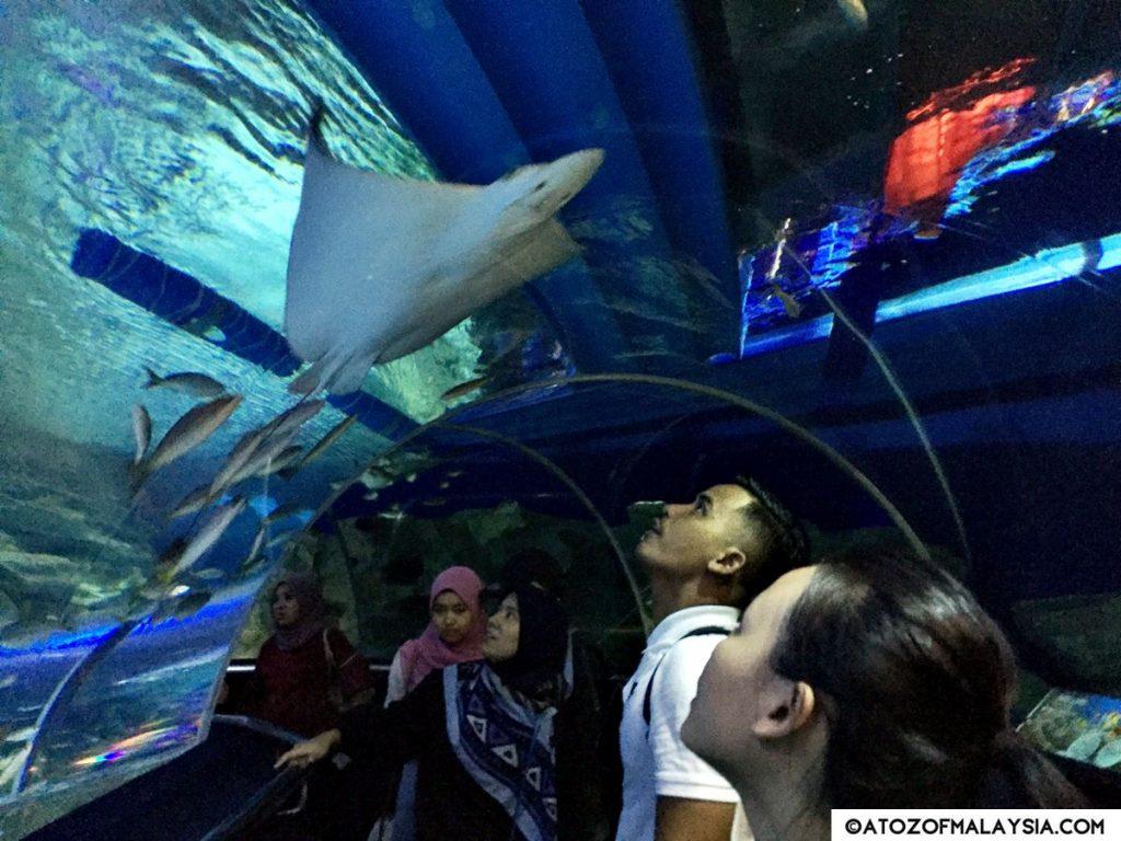 Oceanarium Aquaria KLCC 17