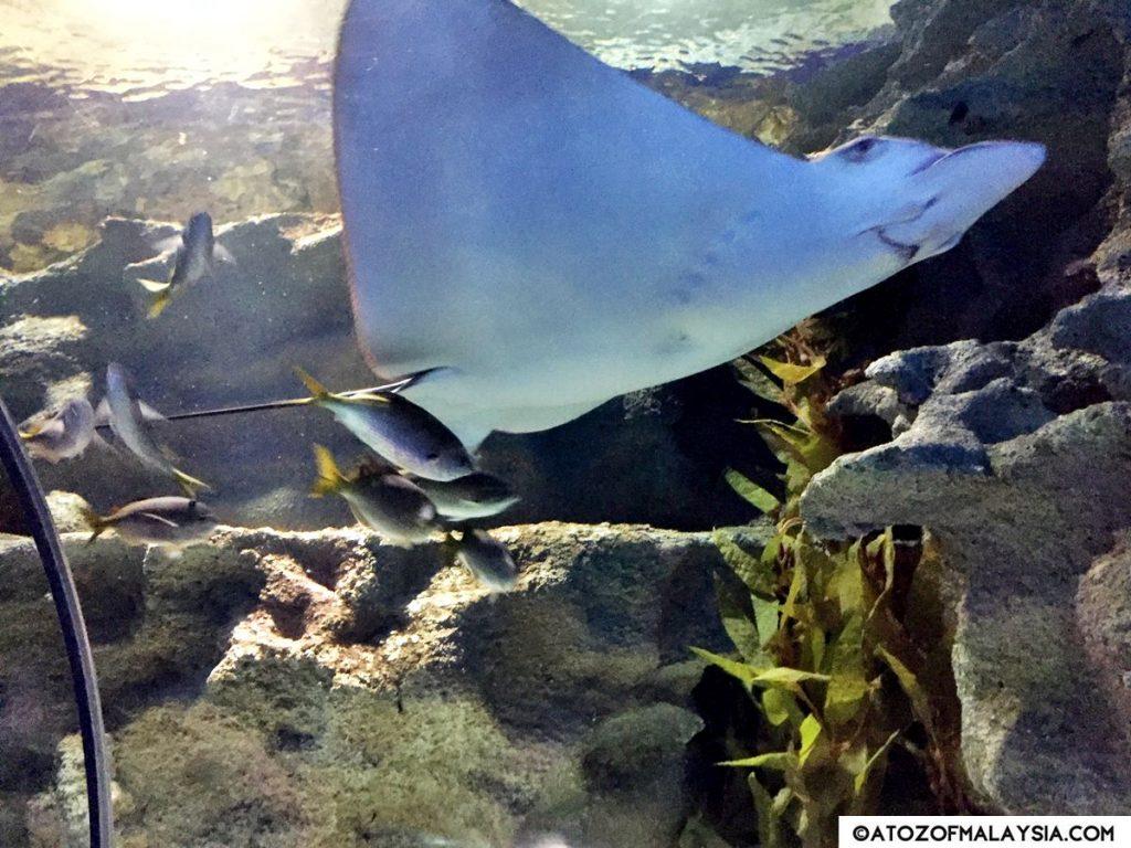 Oceanarium Aquaria KLCC 18