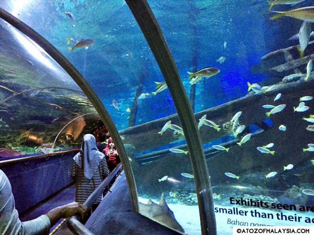 Oceanarium Aquaria KLCC 19