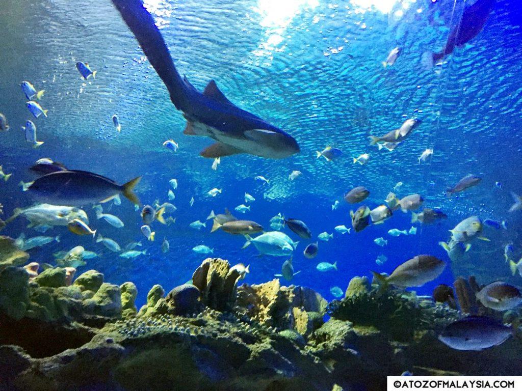 Oceanarium Aquaria KLCC 25