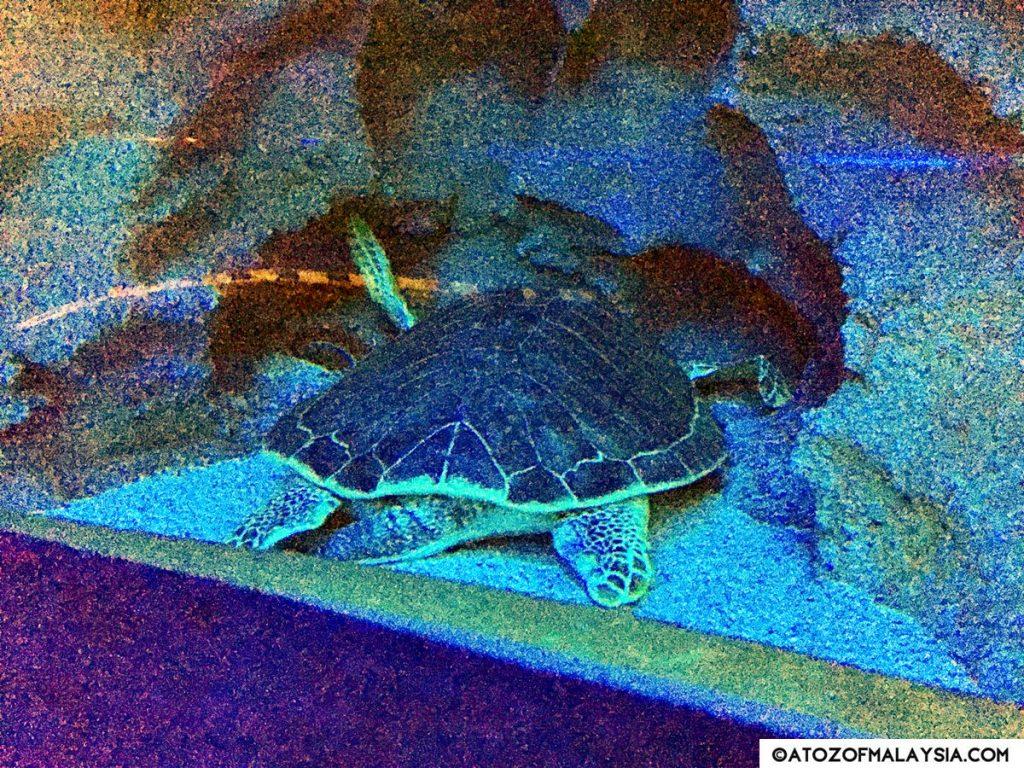 Oceanarium Aquaria KLCC 29