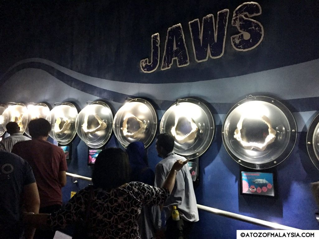 Weird and Wonderful Aquaria KLCC jaws